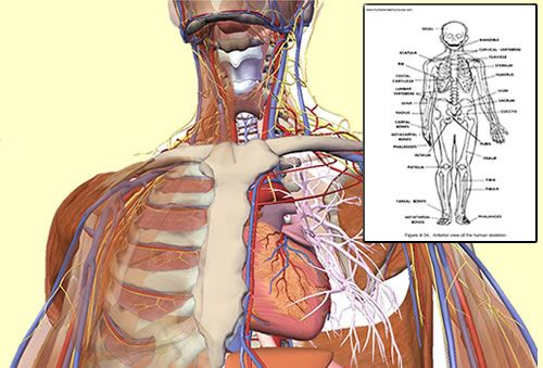 anatomy and physiology online course | Tempat untuk Dikunjungi ...