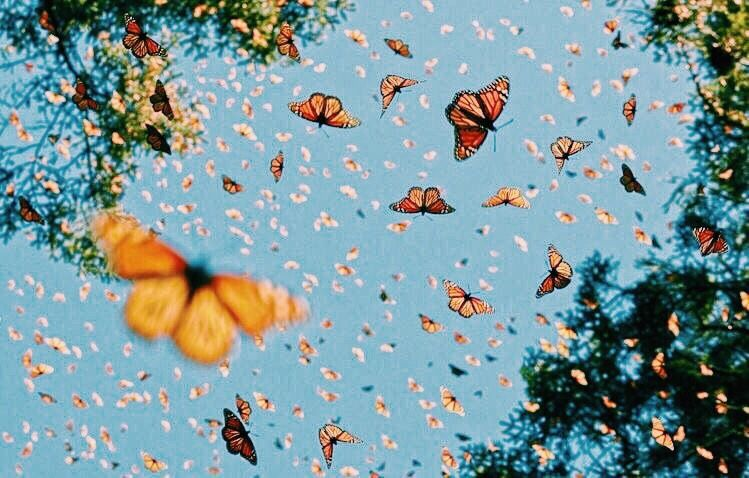 Vsco A Happy Place Images Pictures Aesthetic Wallpapers Nature
