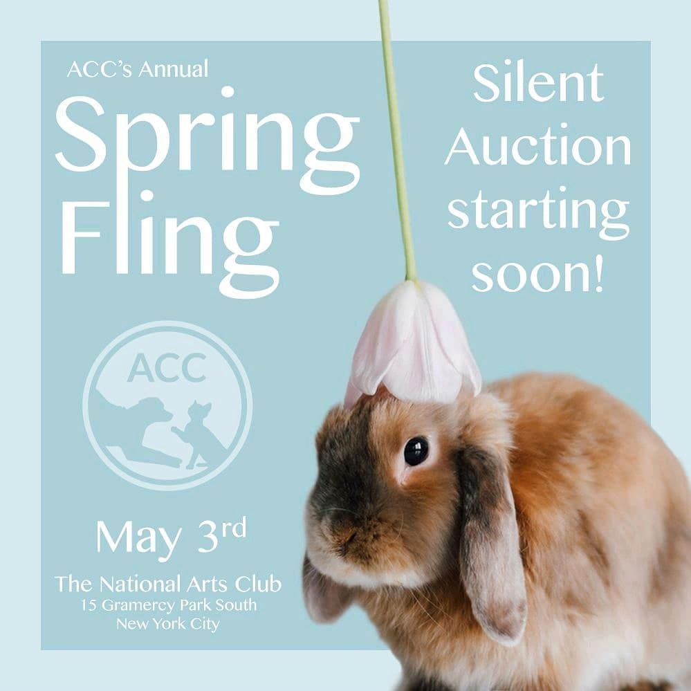Animals Of Accnyc On Instagram The Spring Fling Silent Auction Is Almost Here Spring Has Officially Sprung And Silent Auction Thing 1 Thing 2 Spring Fling