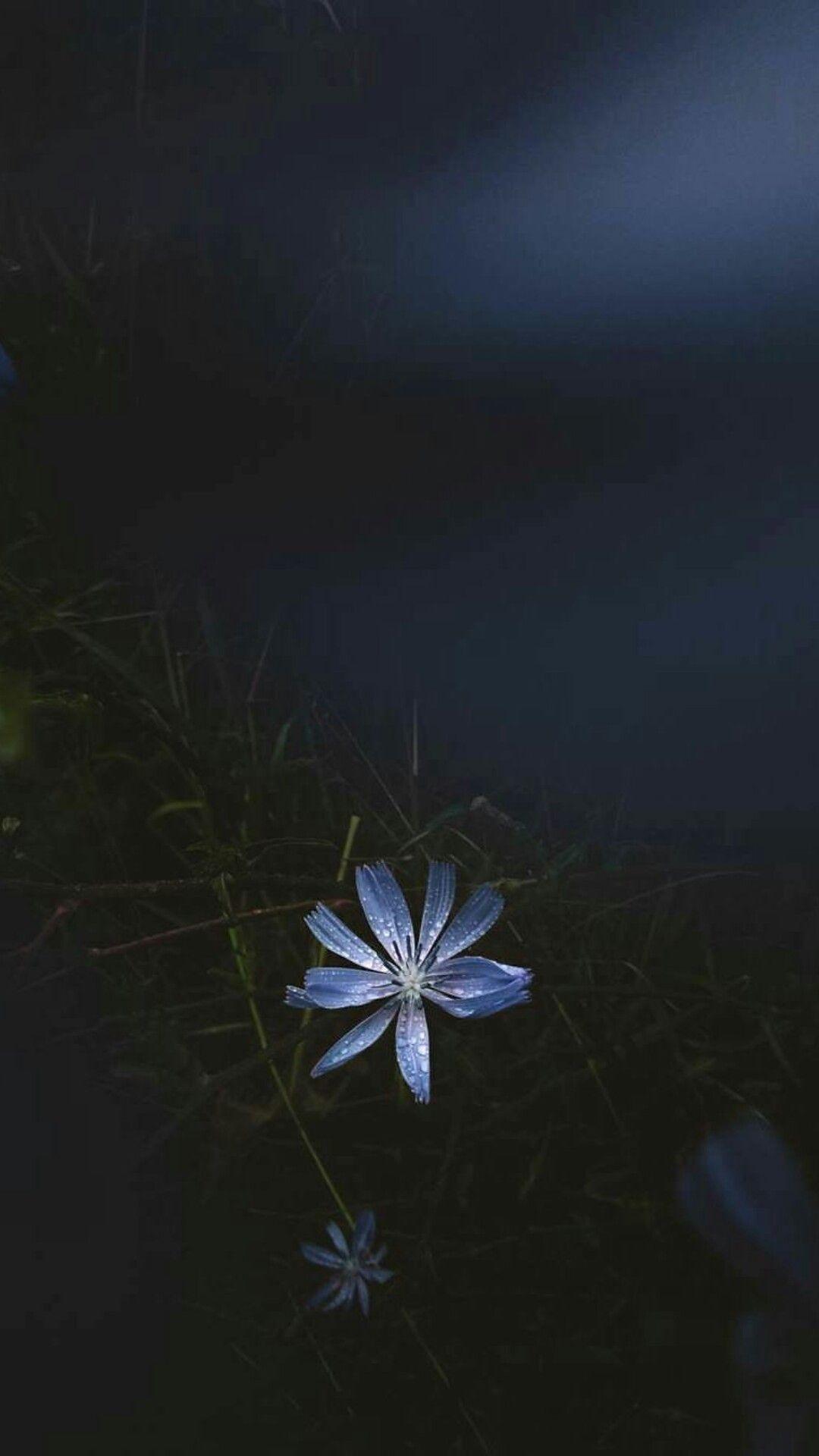 36+ Night flower info