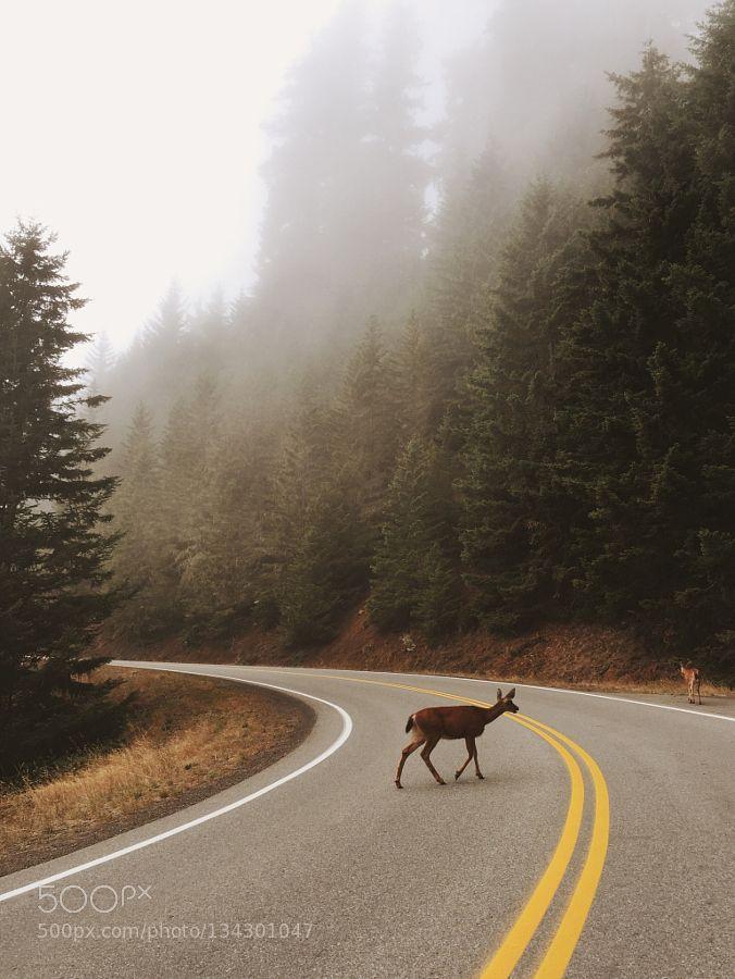 Deer Crossing by ZacharyD