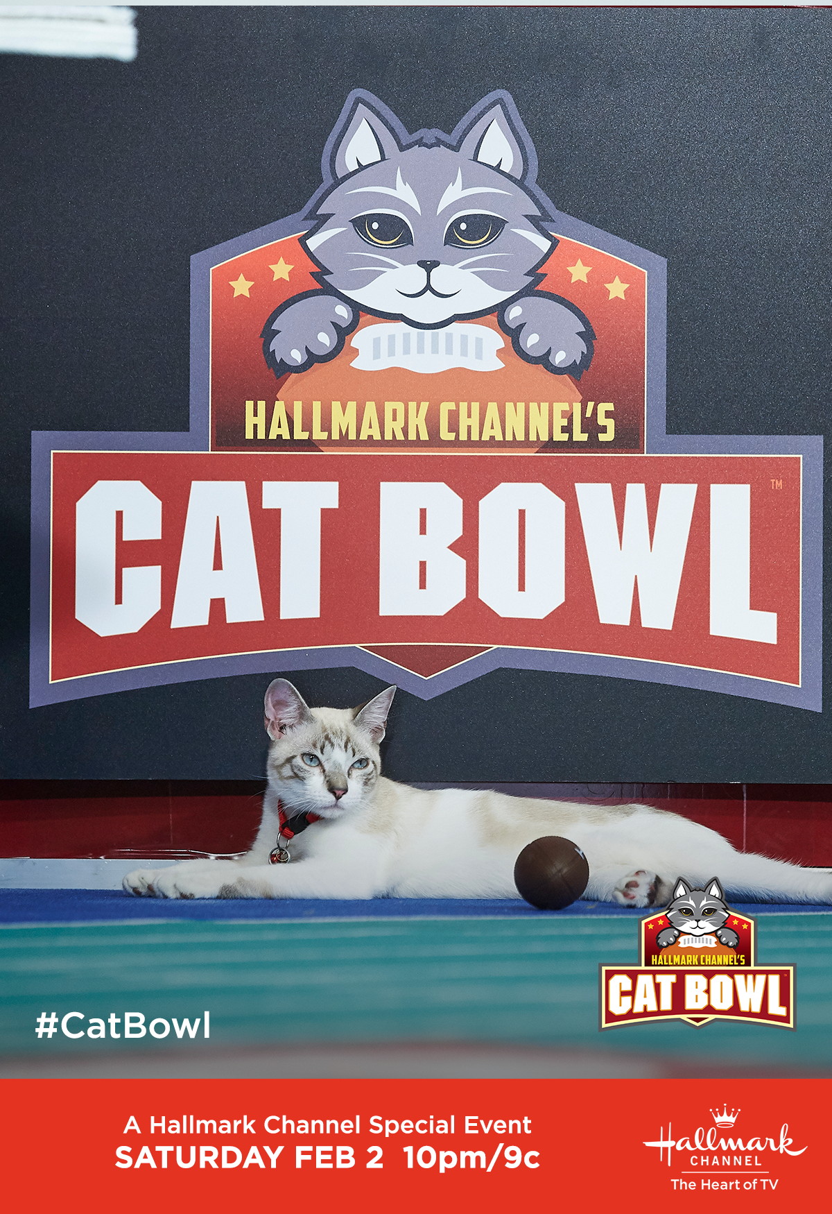 Join Us For Cat Bowl The First And Only Event Featuring Adoptable Adult And Special Needs Cats On February 2 At 10pm 9c On Hallm Cat Bowls Cats Cat In Heat