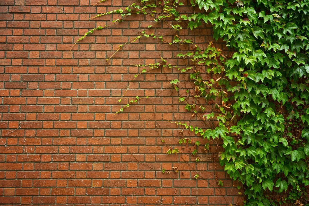Brick Wall with Ivy   landscape in 2019   Ivy plants