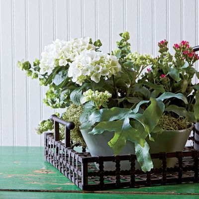 Frame Your WorkIndoor Container Gardening IdeasGardens