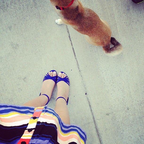 Bright Stripes. (walking the eebs @eeveeinu with @steveterada )