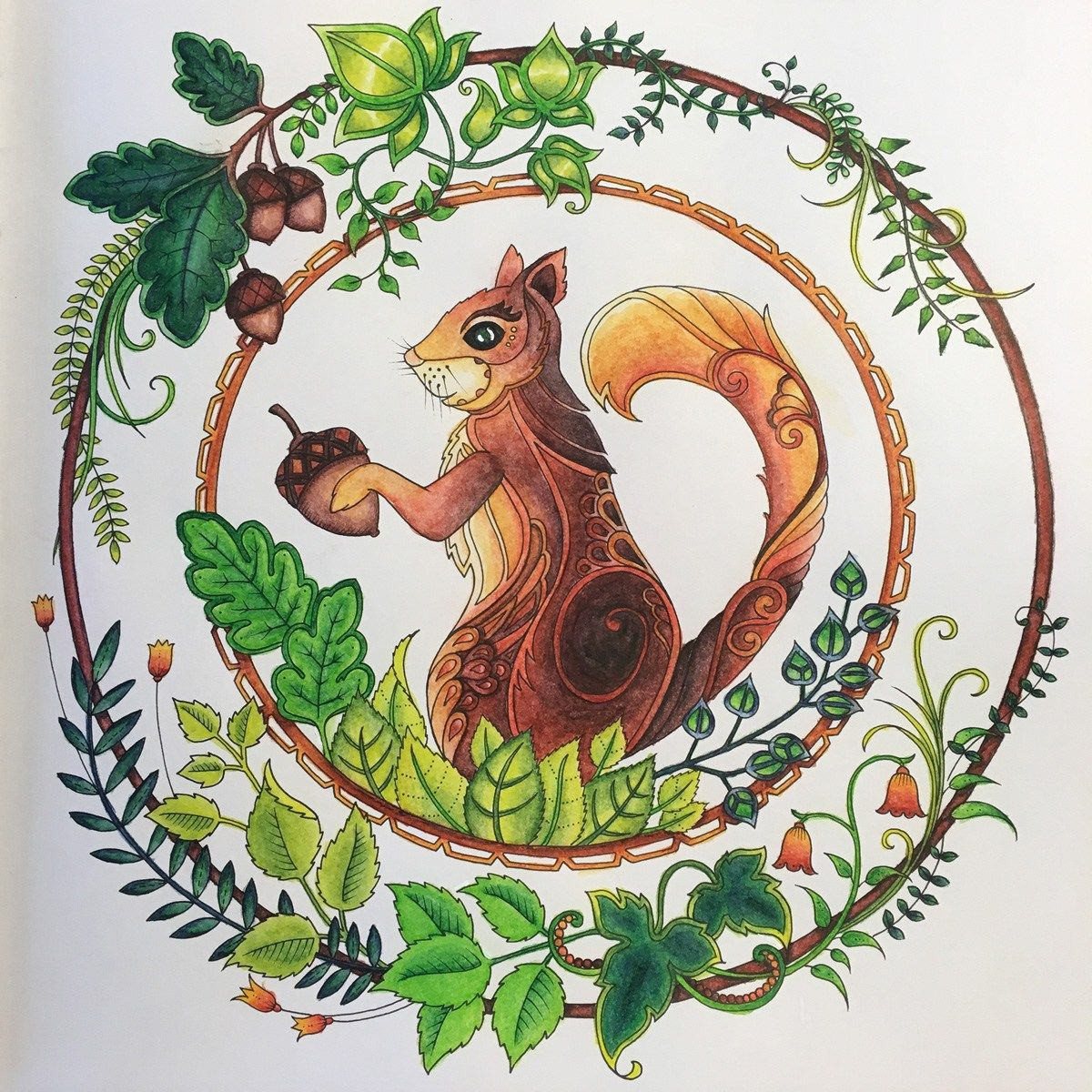 Coloring Books Enchanted Forest