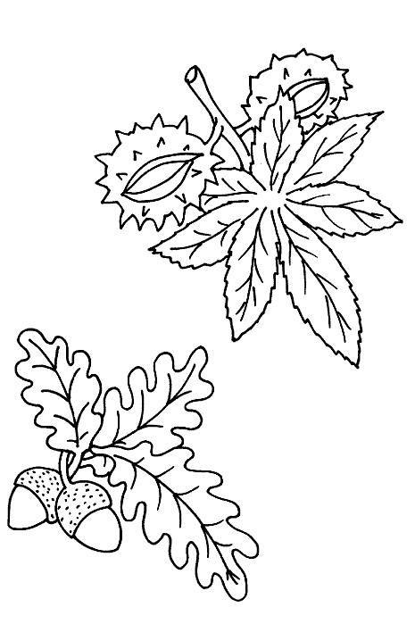 Desenhos para colorir para crianças. Desenhos para imprimir e colorir Natureza 73
