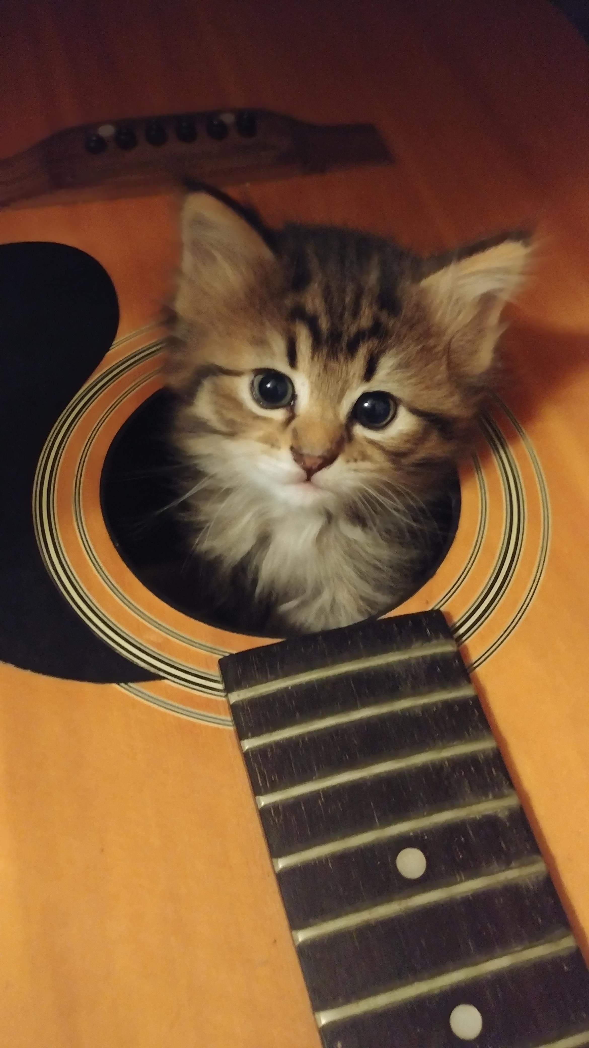 One Of My Kittens Crawled Into A Broken Guitar All By Herselfhttps I Redd It Y4ivv4y6xwa21 Jpg Broken Guitar Kittens Funny Guitar