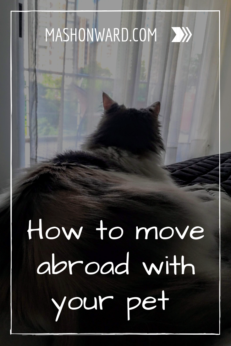 How To Travel To Colombia With A Pet Tips For Taking Your Dog Or Cat Overseas Colombia Travel Pets Travel