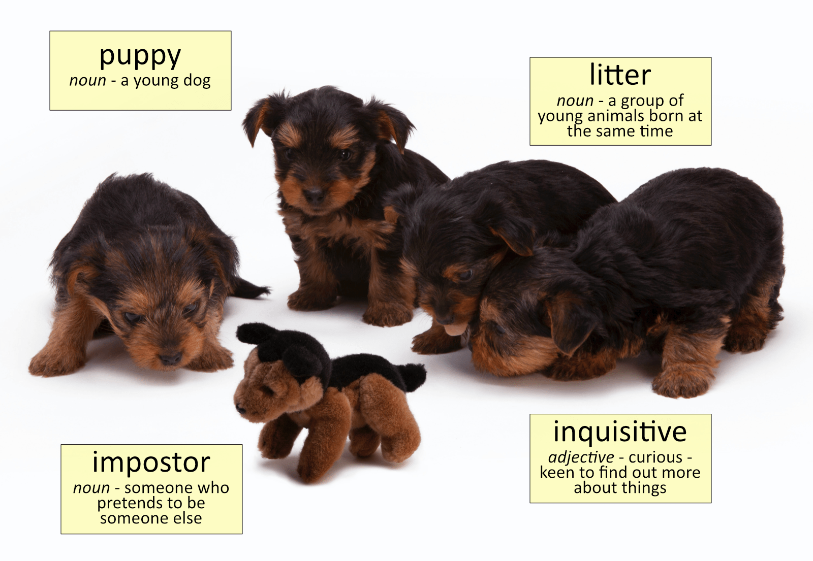 Puppy Vocabulary Funky English in 2020 Puppies, Dog