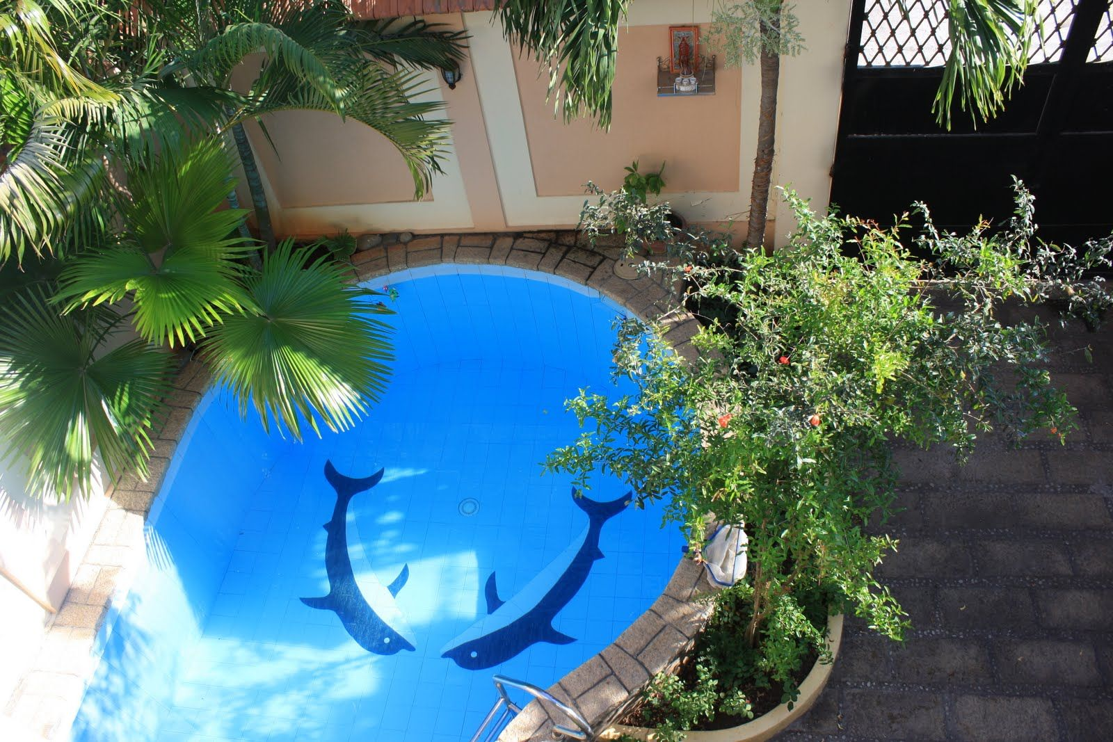 affordable images about swimming pools on pinterest caves santorini with swimming pool design. Interior Design Ideas. Home Design Ideas