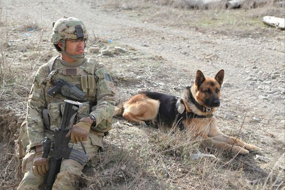 U.S. Army Specialist Marc Whittaker and Military Working Dog Anax, Afghanistan…: