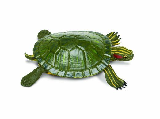 Amazon Com Safari Ltd Incredible Creatures Red Eared Slider Turtle Figure Toys Games Red Eared Slider Turtle Slider Turtle Red Eared Slider
