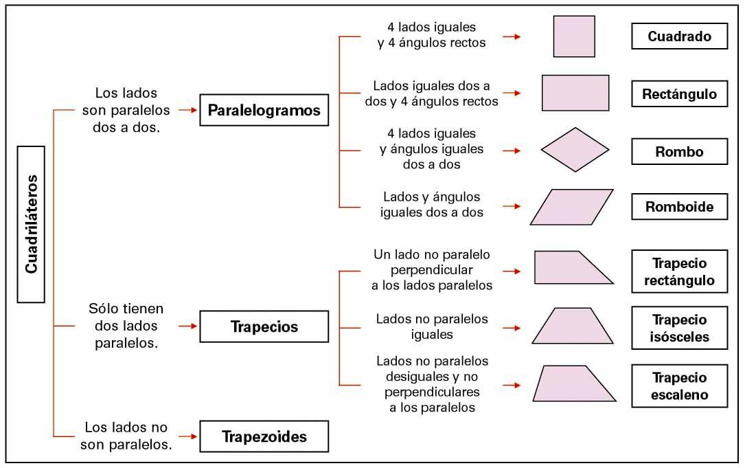 Cuadriláteros: paralelogramos, rombos, romboides y trapecios ...