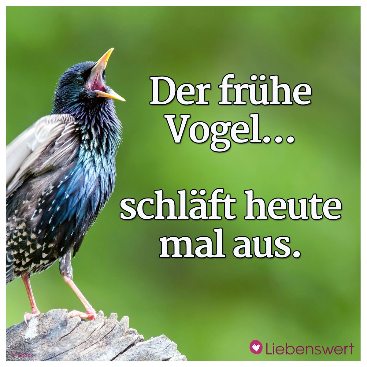 Sprüche Vogel