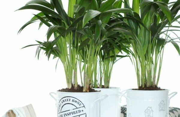 Welche Zimmerpflanzen brauchen wenig Licht?   Pflanzen ...