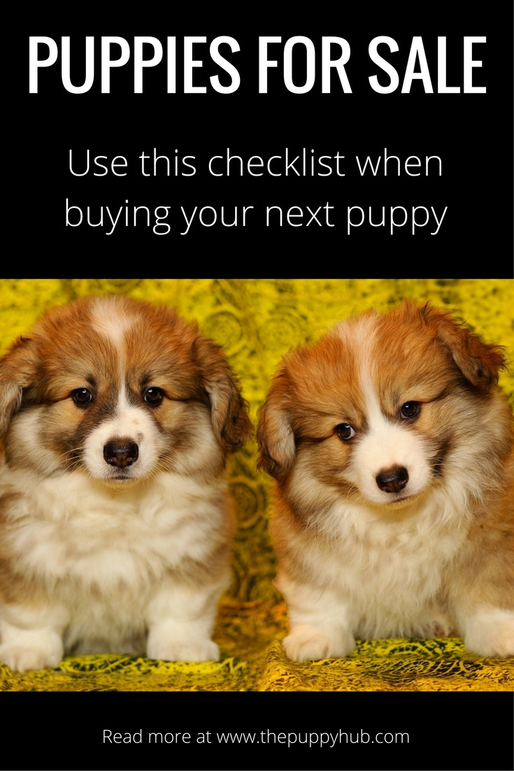 Buying and selling a pet: a selection of articles