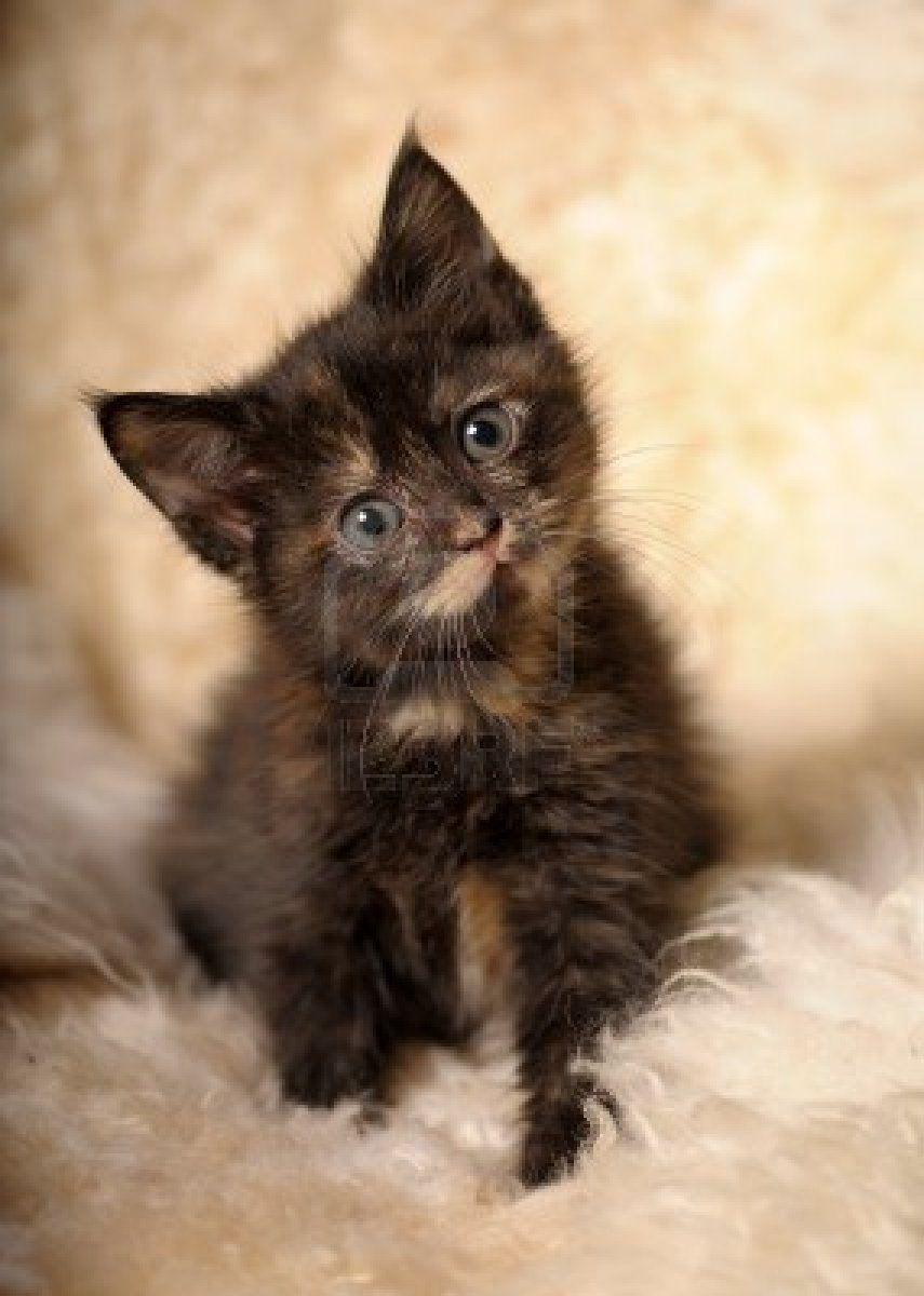 My ex little kitten princess