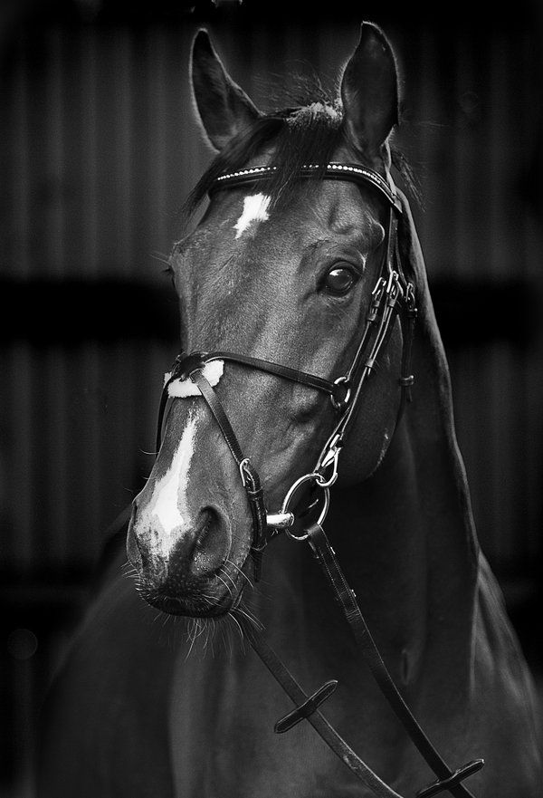 This Is Prince An Ex Racehorse He S Very Pretty And His Picture Made It To An Italian Vogue Magazine Animaux Domestiques Jolis Chevaux Cheval Noir Et Blanc