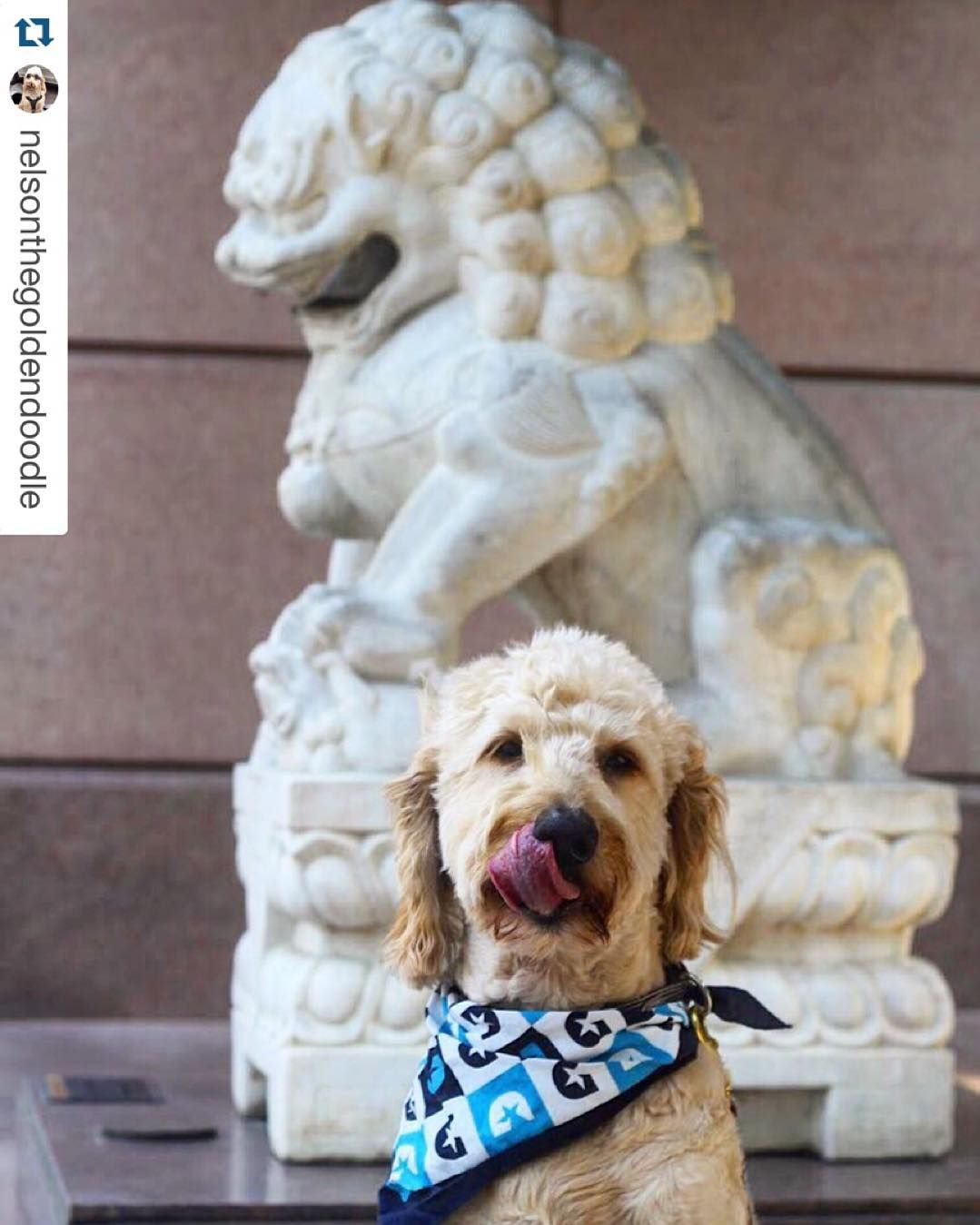 Join us for #CrowAdventureAsia Lions & Tigers & Panda Bears Oh My! Free fun activities today from 10 am - 2 pm. Pets are welcome in the sculpture garden so bring your furry friends. #crowcollection  #Repost @nelsonthegoldendoodle with @repostapp.  I'm terrified of the statues at  the #TrammellCrow Asian Art Museum so I'm pretending he's not behind me.  #helloworldRELAY #BrandUSA