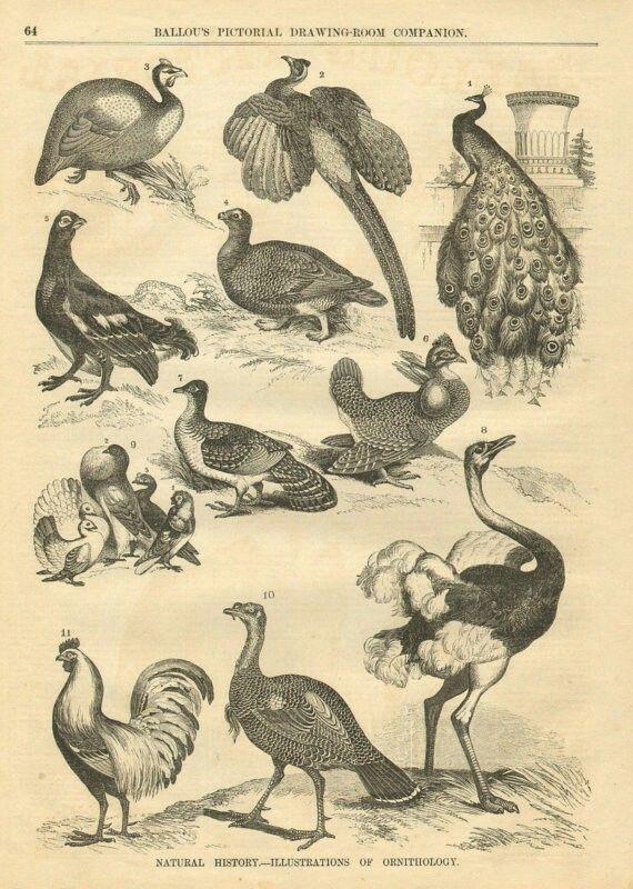 Pin de m a en Bird art | Pinterest