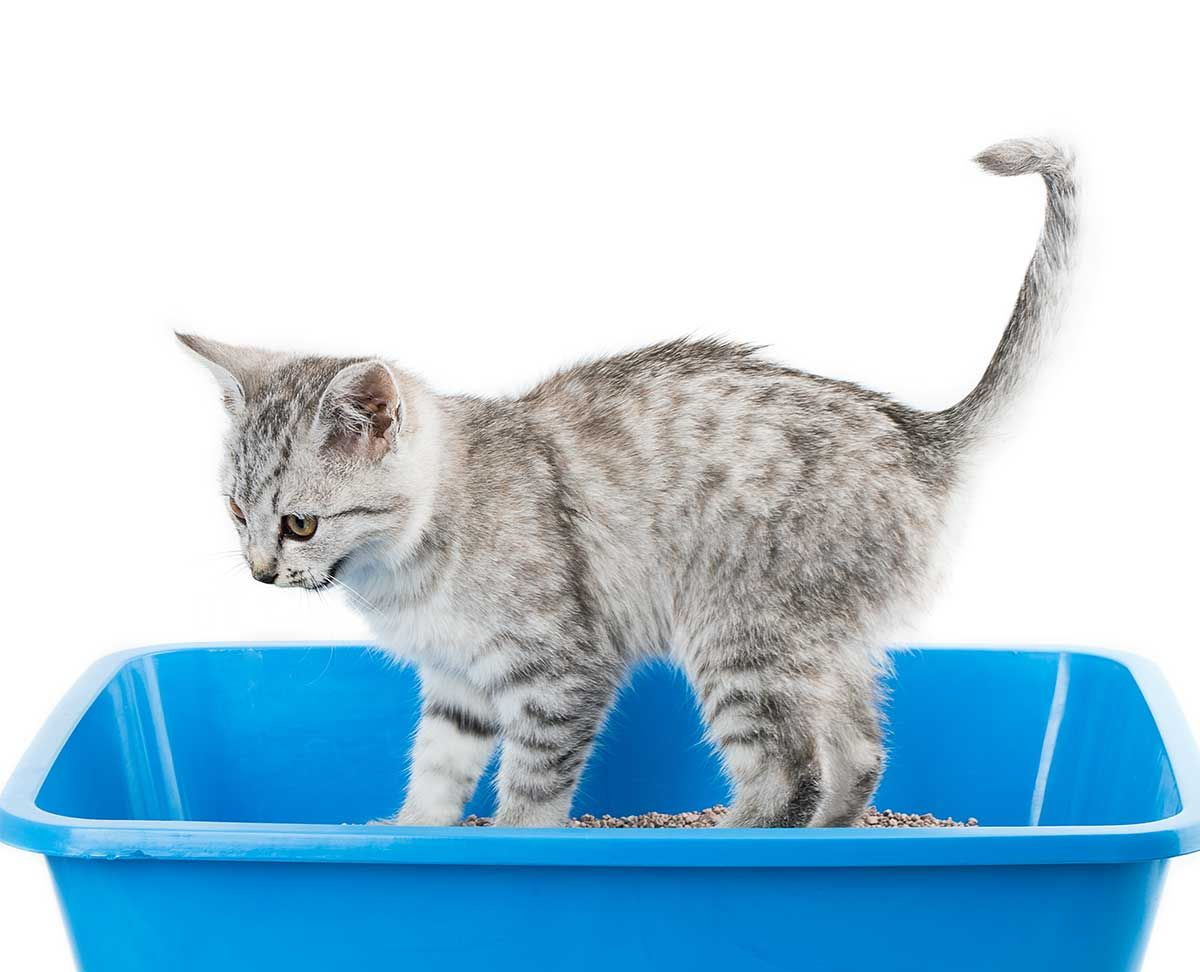 Where To Put The Litter Box A Concise Room By Room Guide Litter