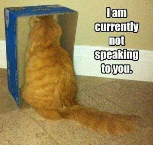 If Your Cat Is Not Speaking To You They May Be Close To Leaving Funny Cat Memes Funny Animals Animal Captions