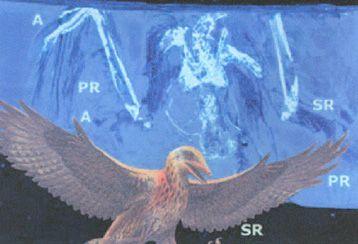TECNOLOGIA NATURA - Alulas - Aerodinámica del vuelo en las Aves