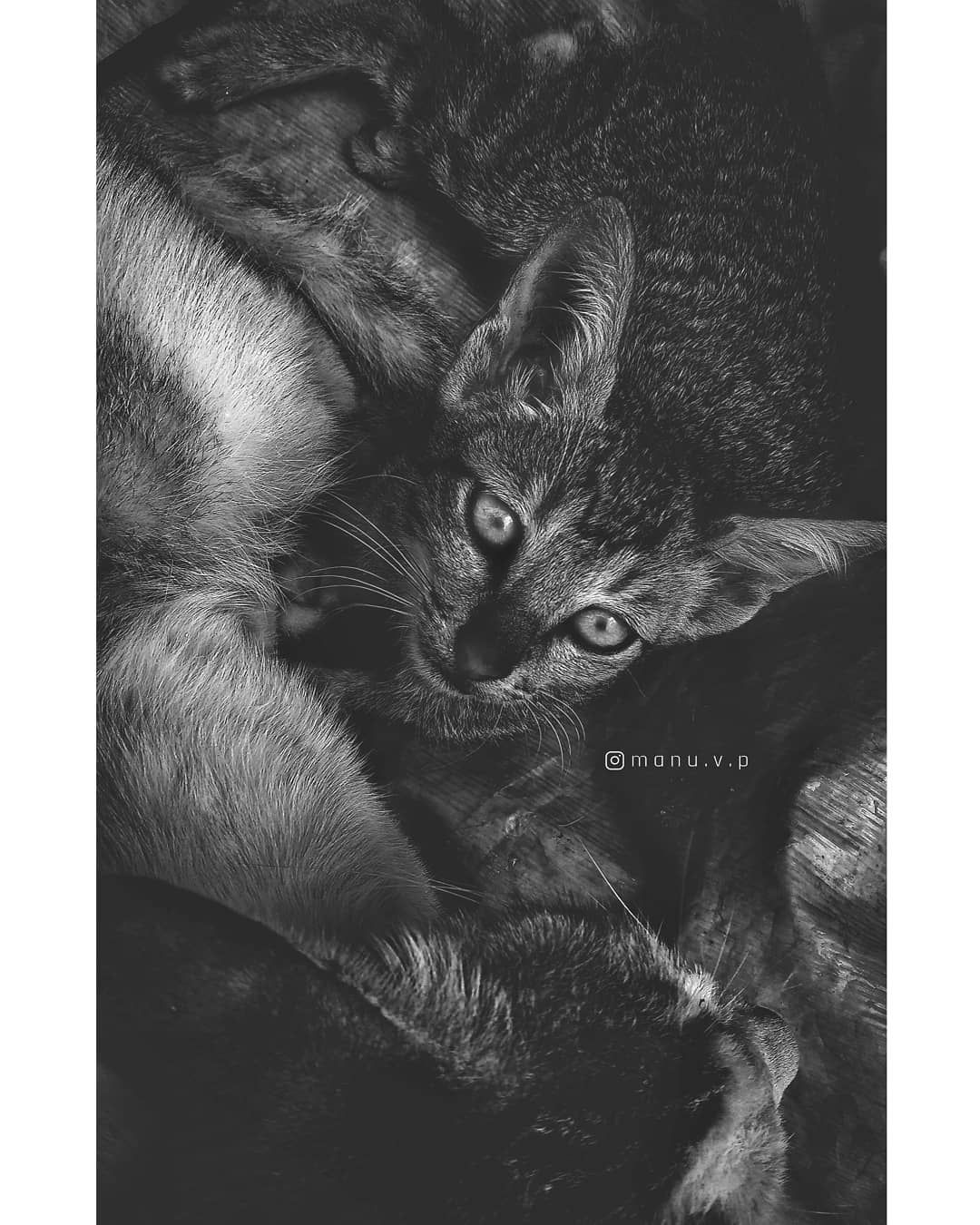 #mobile_photography #redmiindia #mia1photography #moddygrams #lightroomedits #cats_of_instagram