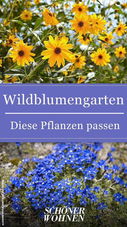 Diese Pflanzen eignen sich sehr gut für einen Wildblumengarten.   #garten #gartentipps #sommer #outdoor #gartenideen #summer #gartengestaltung #outdoorleben #schönerwohnen #gartendesign #kräutergartendesign