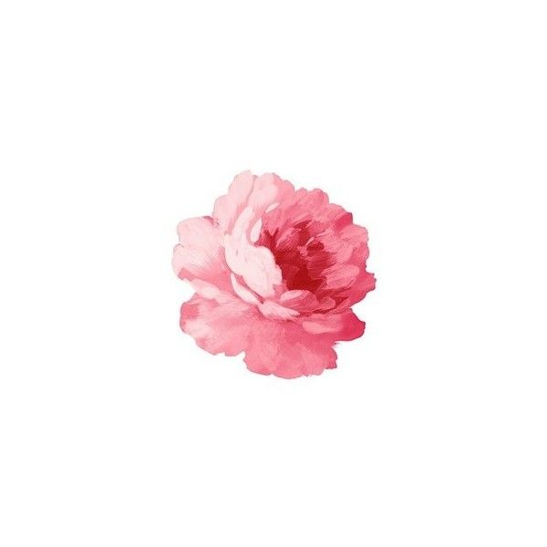 Handpainted flowers layered psd 4 Misc - Free psd for free download ❤ liked on Polyvore featuring flowers, doodles and fiori