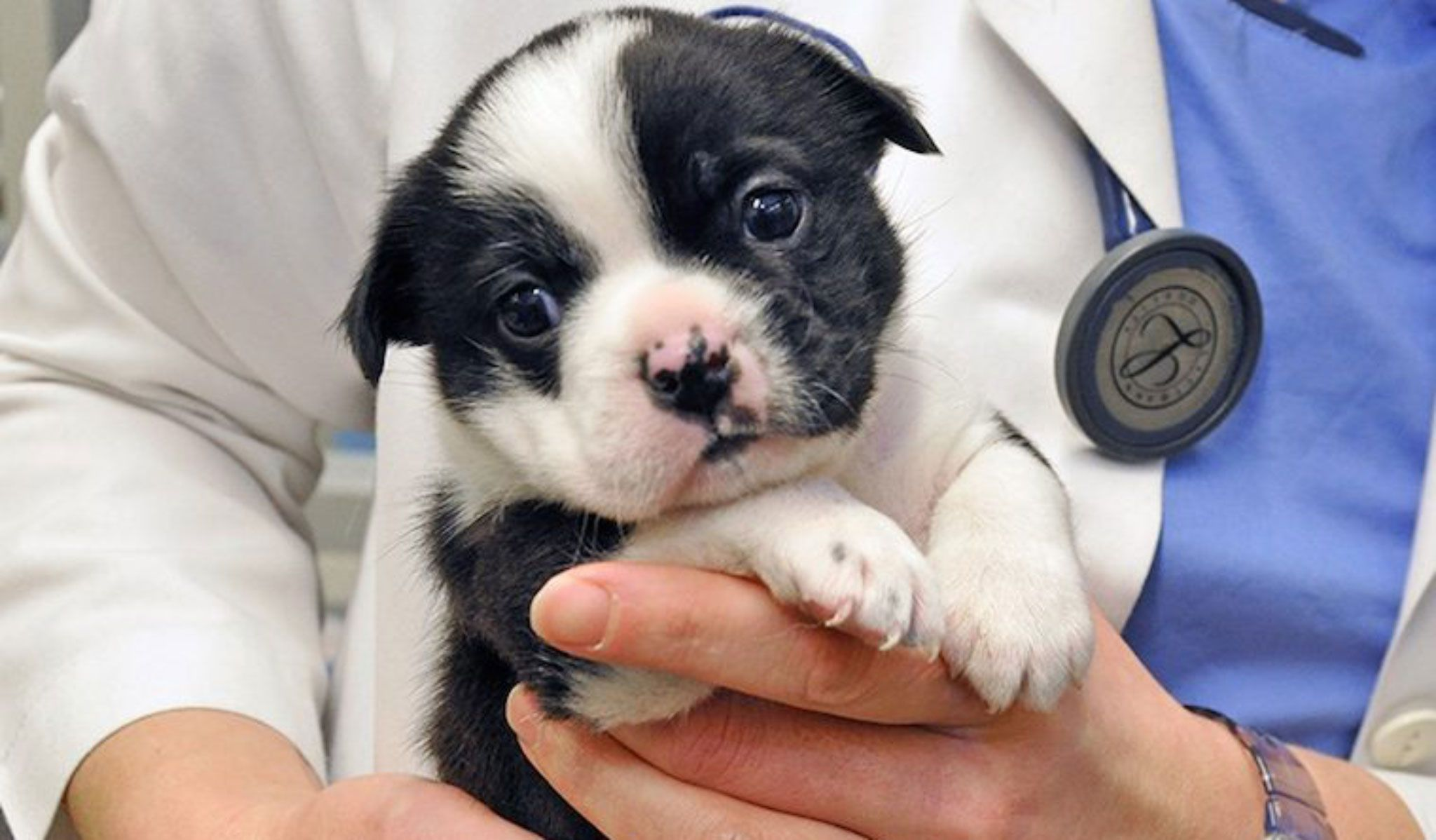 These Incredible Puppy Rescue Stories Will Make You Smile Tiny Puppies Rescue Puppies Animal Hospital