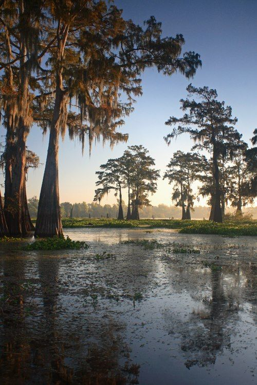 Pin By Redc On Scenery Louisiana Swamp Scenery Nature Photography