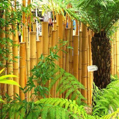 Cloture En Bambou A Poser Sur Muret 90 90 Euros Longueur 150cm