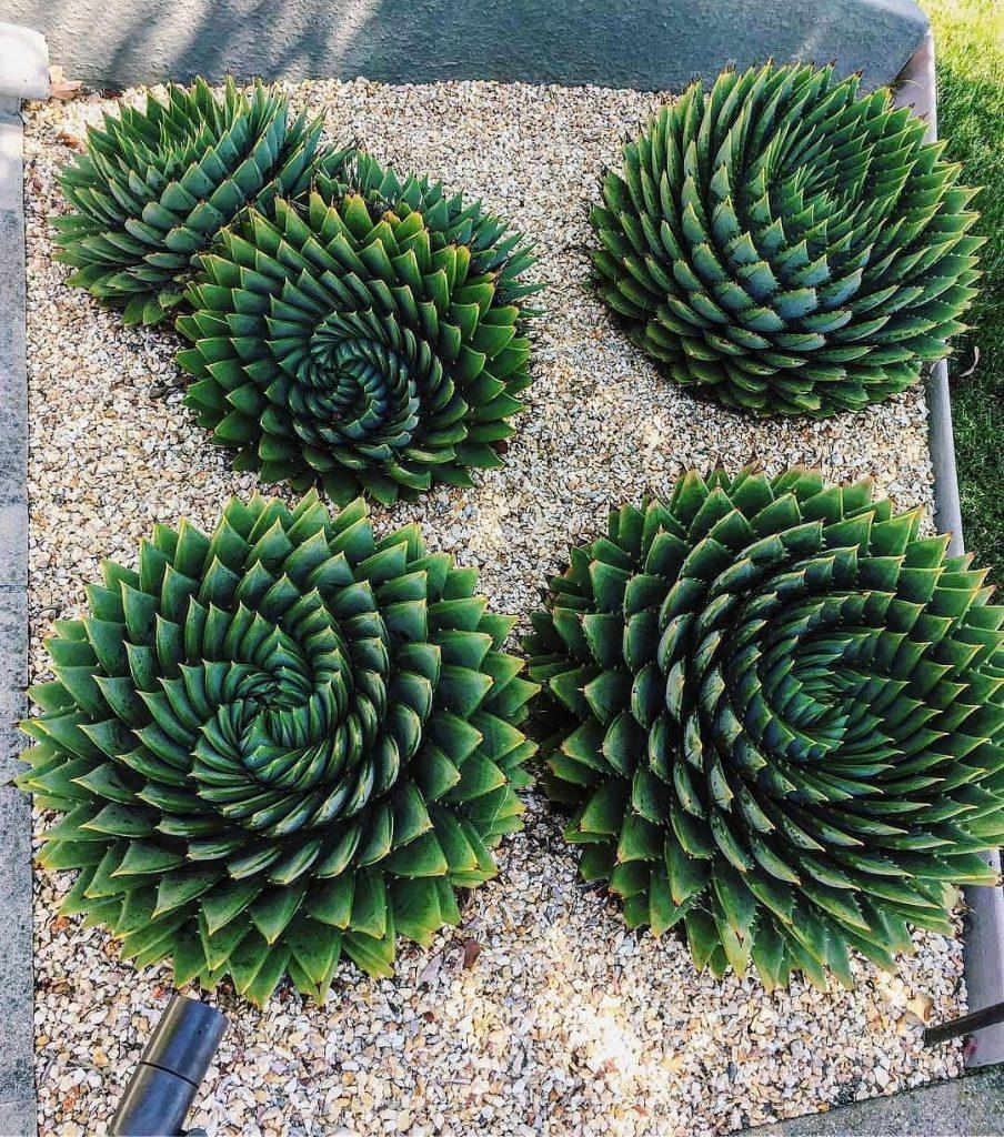 Top 7 Best Succulents You Need in Your Succulent Garden