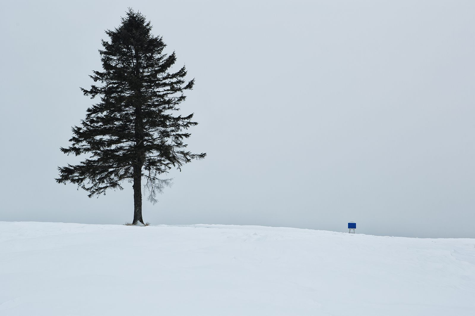 靑靑(Blues) #01, 116x77cm, Pigment print mounted on flexiglas #2013 #LobinKim #PhotoArtist #chair #works #art #photo #pine #pinetree #snow #blue