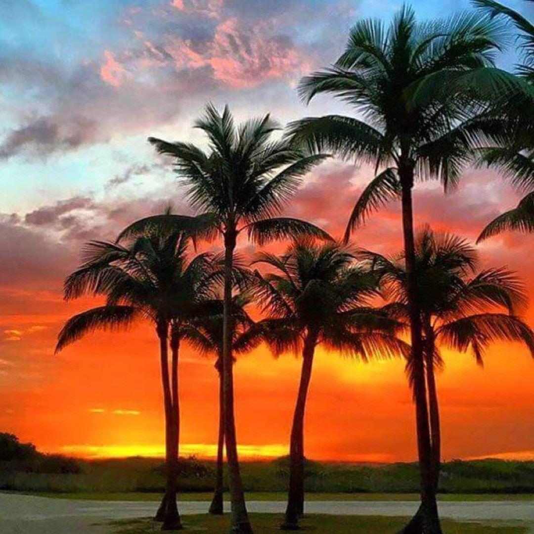 Palm Tree Island: Need A Fix #beachtime #palmtrees #saltlife