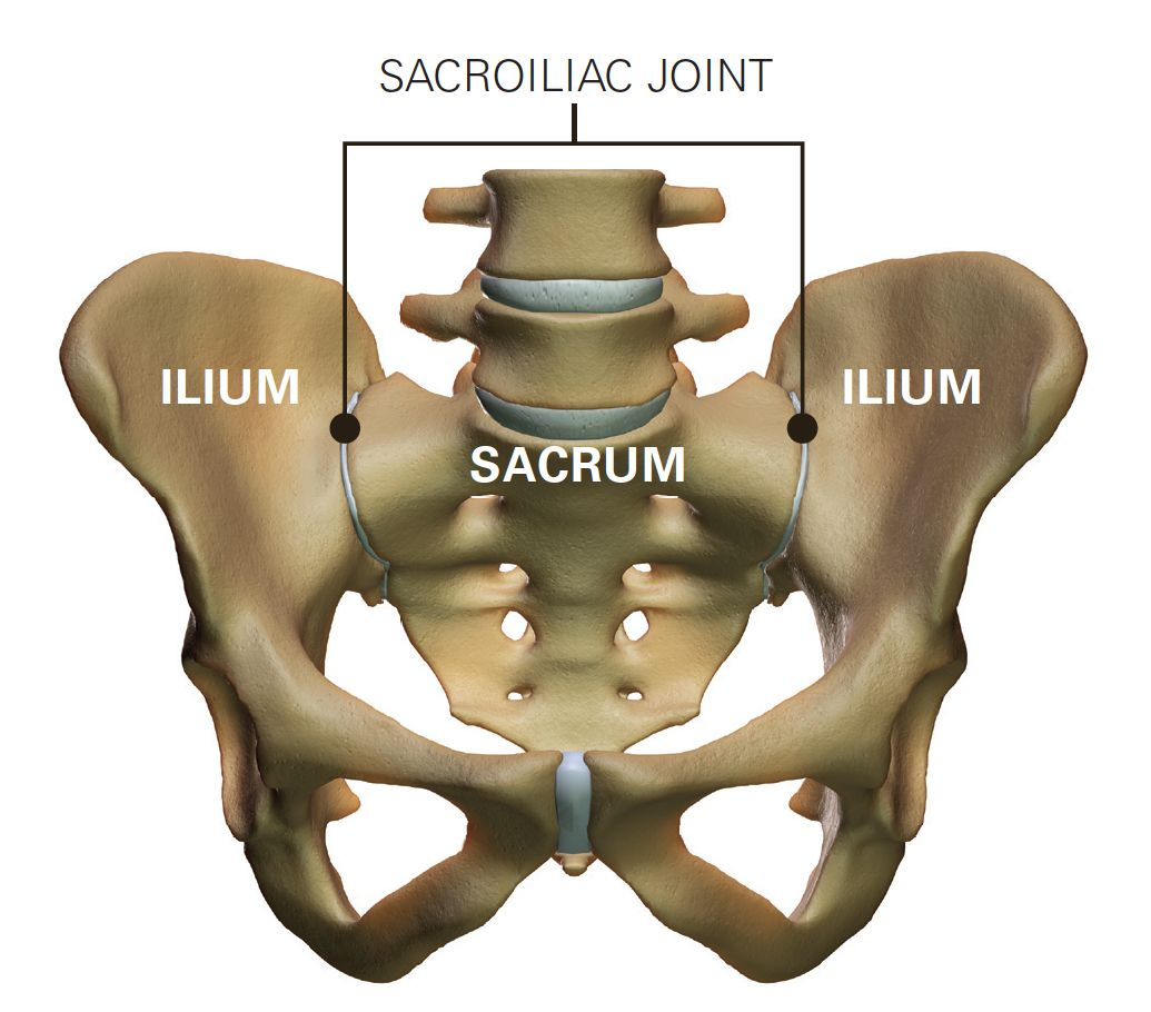 sacroiliac joint - Google Search | radiology | Pinterest ...