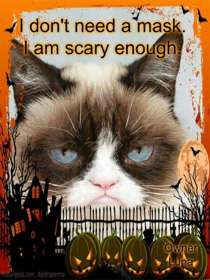 Can Cats Eat Eggs CatsTalking ID5242508035 Grumpy cat