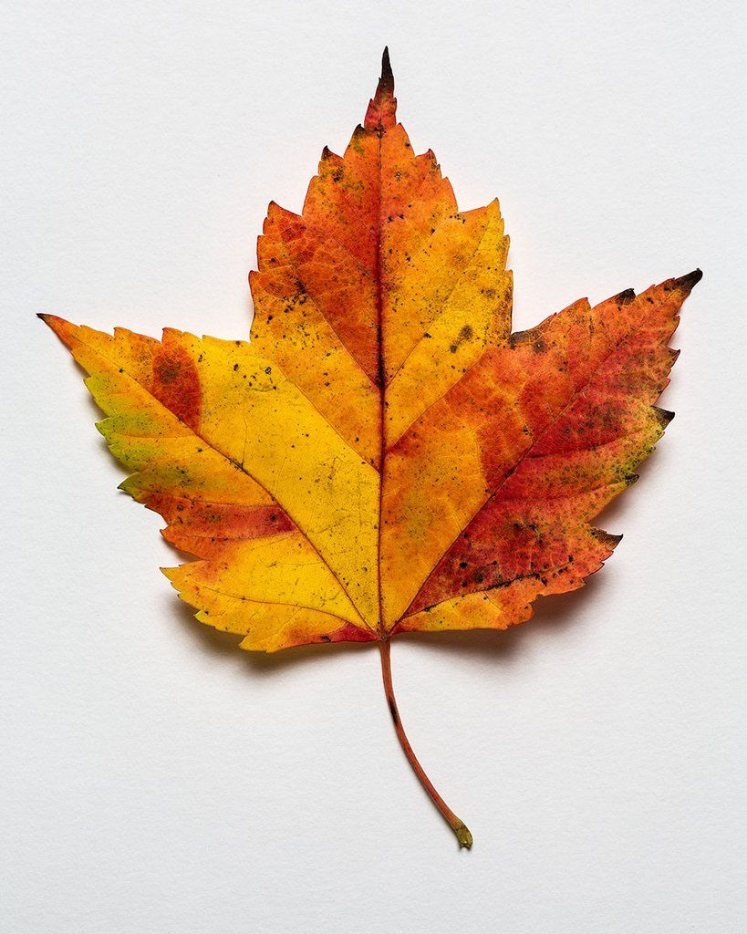 Pin By Photopop Prints On Nature Autumn Leaves Photography Autumn Leaves Art Leaf Photography