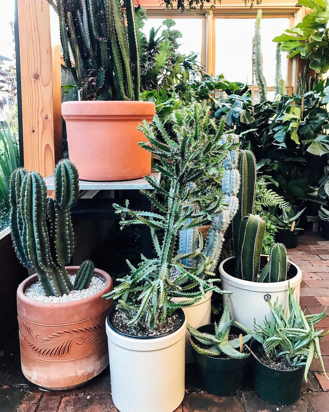 Our Cactus And Succulent Sale Is Ongoing Through Sunday 15 Off Large Specimens Like These Grab Yourself A Pr Cacti And Succulents Succulents Cactus For Sale