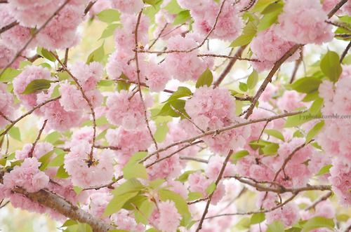 J Yphoto Spring Blossom J Y On Days Like This When The Wind Blows And A Ray Of Sunshine Lightens Your Heart Think Of Me With Spring Blossom Blossom Flowers