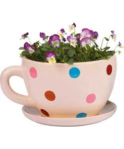 Spotty Cup And Saucer Planter This Isn T The Planter I Wanted To Pin The Ones I Saw Were In The Tesco Magazine With Images Unusual Planter Tea Cup Planter Outdoor Cups