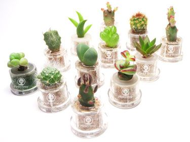 Live mini cactus wedding favours A Moment Like This Wedding