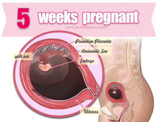 Pin on Weekly Guide to Pregnancy