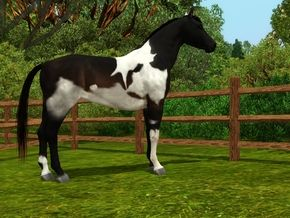 Pin On Sims 3 Horses