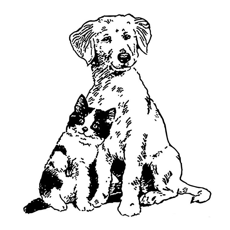 Coloriages adultes chien et chat ensemble recherche google chiens pinterest - Chat a colorier adulte ...