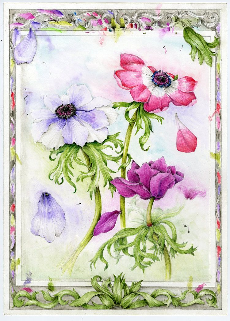 Flowers gallery botanical artist illustrator learn to draw art books art supplies workshops