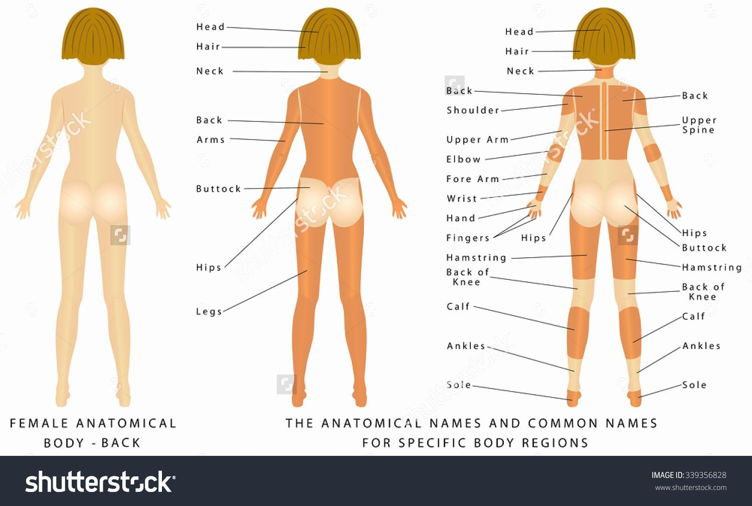 Pin On Human Figure Drawing Anatomy Reference