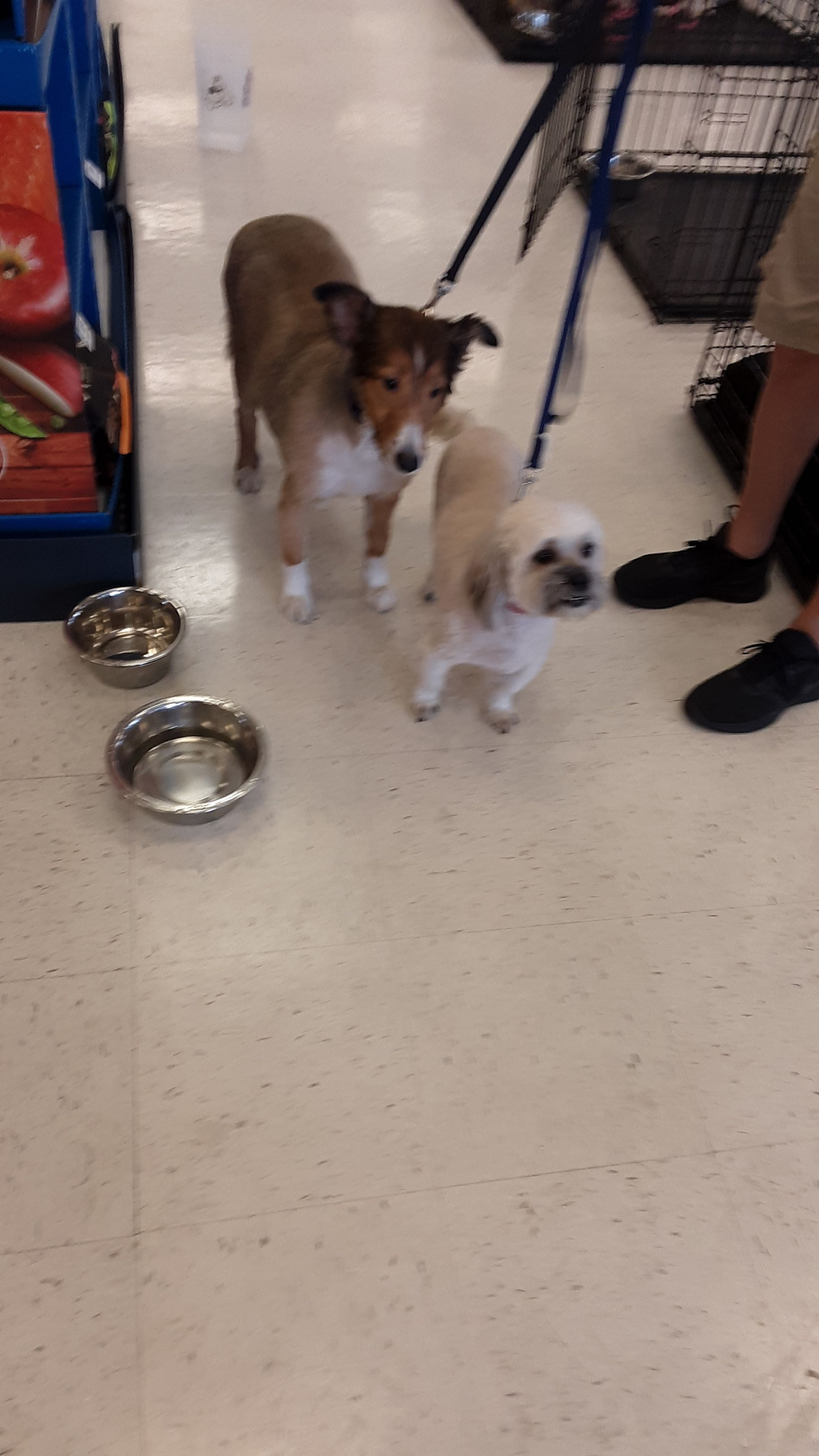 Adopt Casey & Cruz on | Pets needing homes in Florida